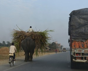 Be careful when you get behind the elephant