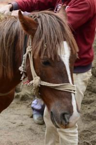 sand horse power