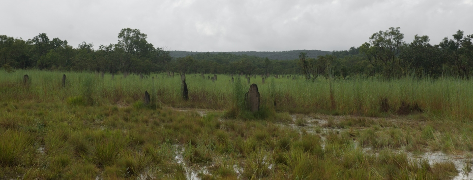 magnetic termite mounds-12