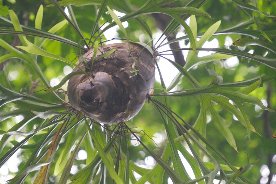 pod in canopy