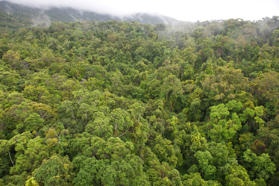 rainforest from Skyrail-8