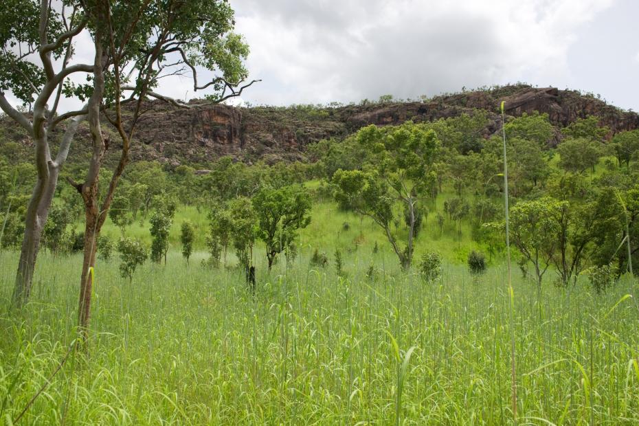 the northern bush-27