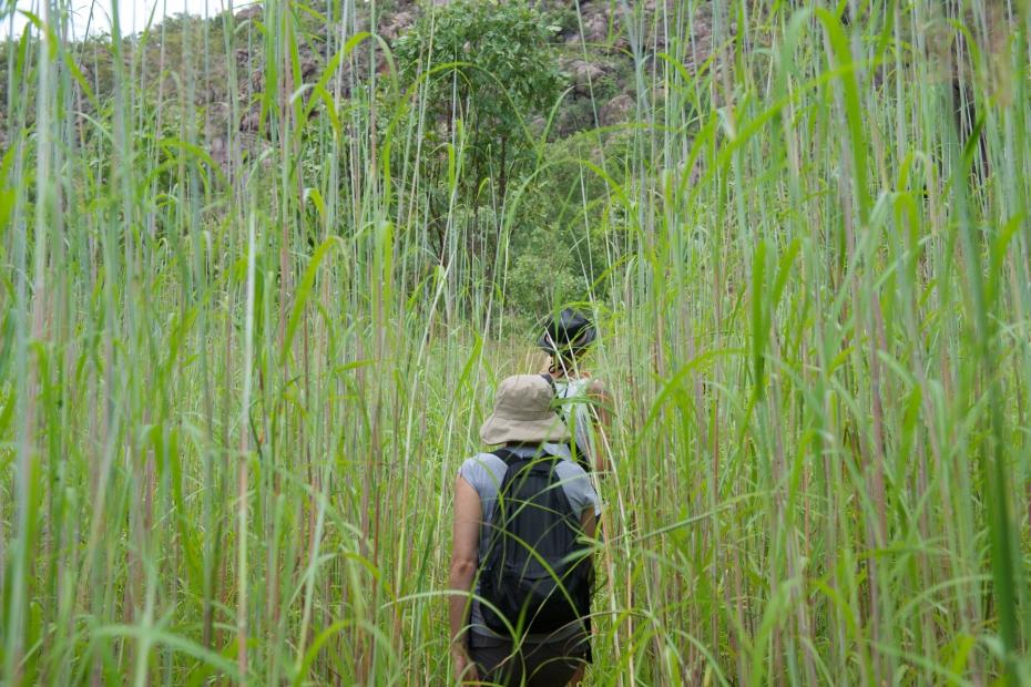 walking thru tall grass-29